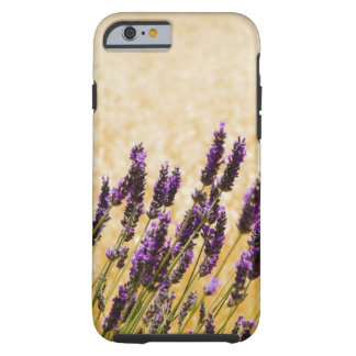 Lavender flowers in a field, Siena Province, Tough iPhone 6 Case
