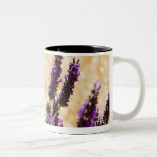 Lavender flowers in a field, Siena Province, Two-Tone Coffee Mug