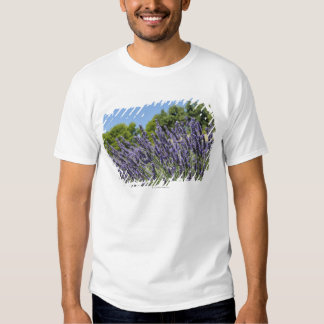 Lavender flowers in field at summer, Provence Tee Shirt