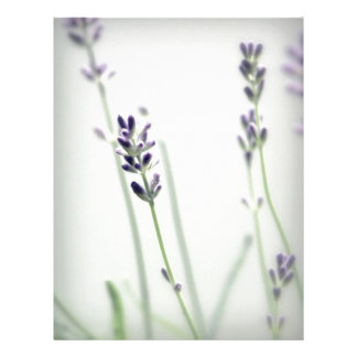 Lavender Flowers Letterhead