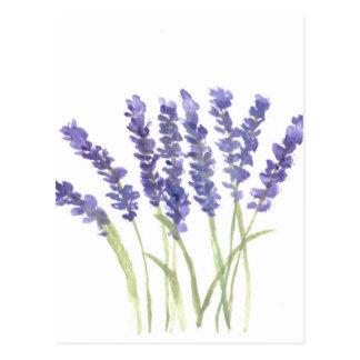 Lavender flowers postcard