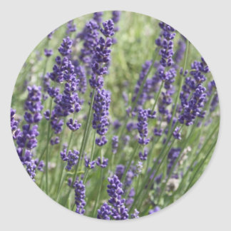 Lavender Flowers Stickers