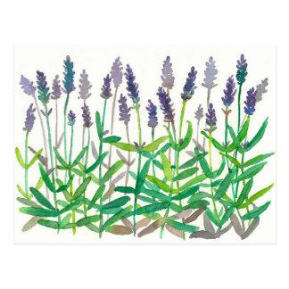 Lavender Flowers Watercolor Painting Herbal Art Postcard