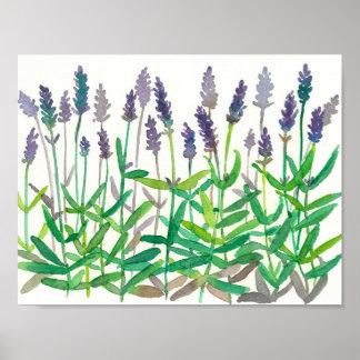 Lavender Flowers Watercolor Painting Herbal Art Poster