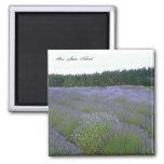 Lavender Fridge Magnet