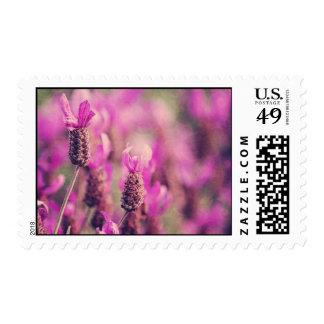 Lavender Garden Photo with Damask Swirls. Postage Stamp