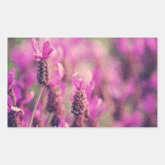 Lavender Garden Photo with Damask Swirls. Rectangular Sticker