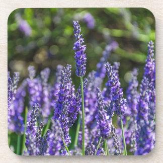Lavender hard plastic coasters