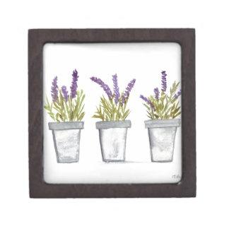 Lavender herb pots gift box