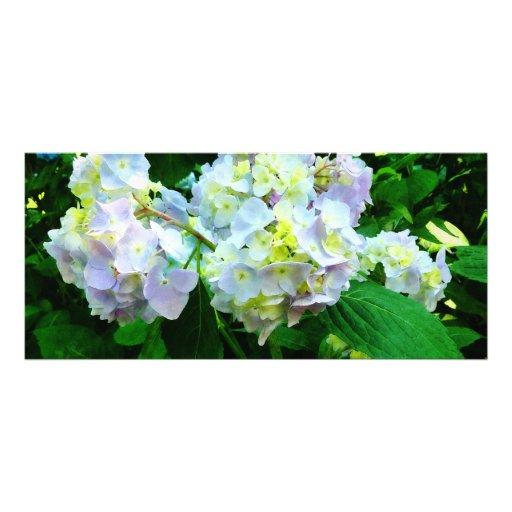 Lavender Hydrangea in Garden Custom Rack Card