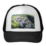 Lavender Hydrangea Macrophylla (blue) flowers Hats