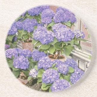 Lavender Hydrangea Macrophylla 'Enziandom' flowers Coasters