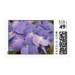Lavender Hydrangea Macrophylla 'Enziandom' flowers Stamp