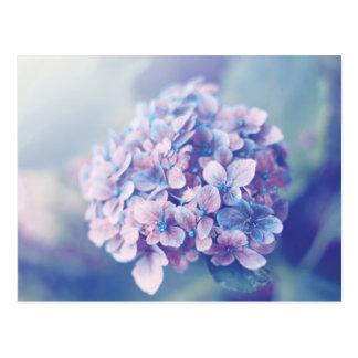Lavender Hydrangea Postcard