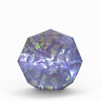 Lavender Hydrangeas Award