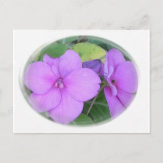 Lavender Impatients in Swirl postcard