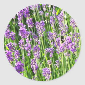 Lavender in the Grass Round Stickers