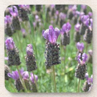Lavender Inspiration Coaster Set