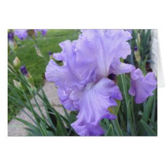 Lavender Iris Cards