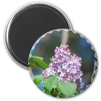Lavender Lilac  Magnet