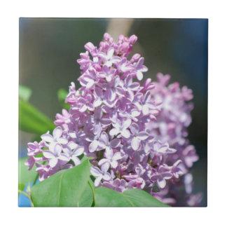 Lavender Lilacs Tile