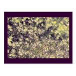 Lavender & Lime Fairy Flowers, template Postcard
