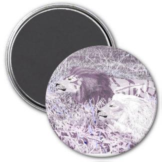 Lavender Lions Magnet
