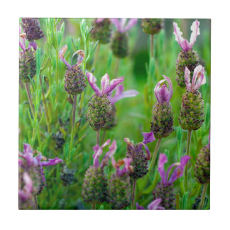 Lavender Many Flowers Small Square Tile