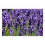 Lavender note card