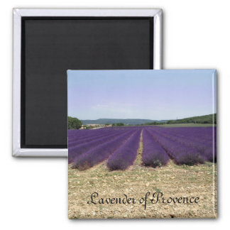 Lavender of Provence 2 Inch Square Magnet