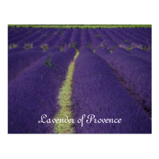 Lavender of Provence Post Cards