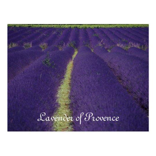 Lavender of Provence Postcard