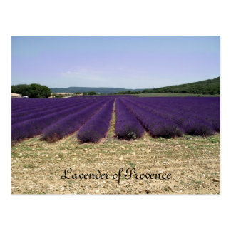Lavender of Provence Postcards