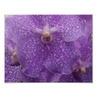 lavender orchid greeting card poster