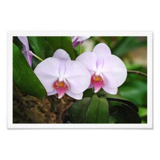 Lavender Orquids Photographic Print
