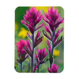 Lavender Paintbrush Magnet