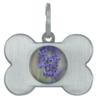 Lavender Pet Name Tag
