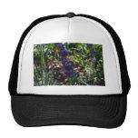 Lavender photo with honeybee mesh hat