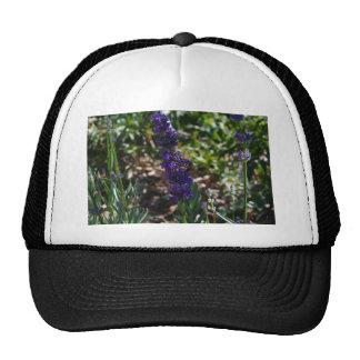Lavender photo with honeybee trucker hat