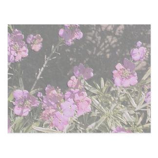 Lavender Pink Wallflower Postcard