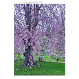 LAVENDER PINK WEEPING CHERRY TREE (PHOTOG) CARD