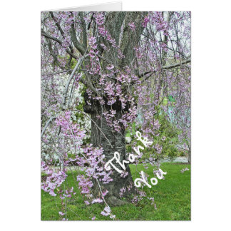 LAVENDER-PINK WEEPING CHERRY TREE/THANK YOU CARD