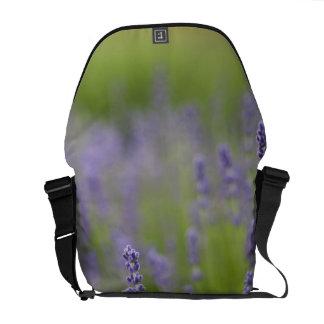 Lavender plants 2 courier bag