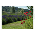 Lavender & Poppies Cards