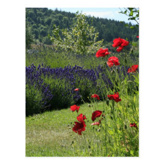 Lavender & Poppies Postcard
