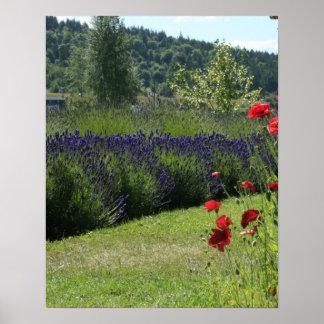 Lavender & Poppies Print