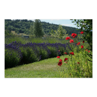 Lavender & Poppies Poster