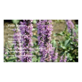 Lavender Purple Loosestrife (Lythrum Salicaria) fl Double-Sided Standard Business Cards (Pack Of 100)
