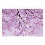 Lavender Purple Tree Photograph