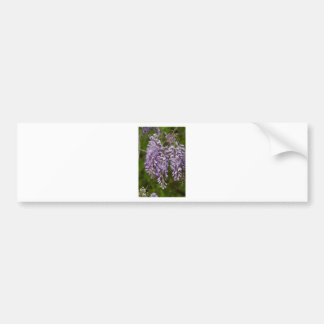 Lavender Purple Wisteria Wildflower Vine Car Bumper Sticker